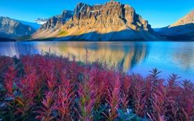 Обои небо, листья, снег, горы, отражение, растения, Alberta