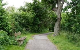 Картинка скамейка, природа, парк, дерево, дорожка, прогулка, скамья