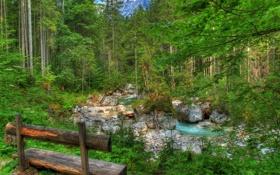 Обои лес, деревья, скамейка, парк, река, ручей, камни