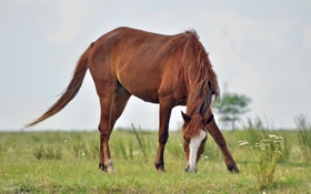 Обои природа, поле, конь