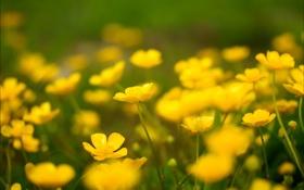 Обои природа, весна, поле, цветы
