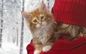 Картинка зима, котенок, рыжий