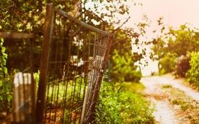 Картинка лето, закат, забор, боке