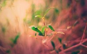 Картинка листья, макро, кофе, фокус, rgb