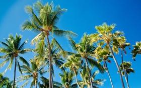 Обои листья, palms, paradise, пальмы