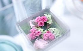 Обои белый, цветы, розовый