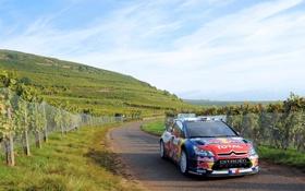 Картинка Гонка, Асфальт, Citroen, Виноград, DS3, WRC, Rally
