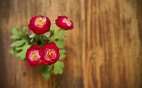 Обои пол, лепестки, цветы
