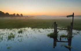Картинка трава, вода, солнце, деревья, туман, болото, утро