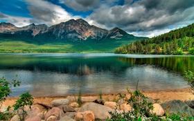 Обои лес, небо, трава, облака, деревья, горы, природа