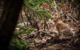 Картинка лес, заяц, обед