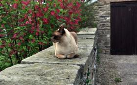 Картинка кошка, цветы, фон, дерево, отдых, мордочка, профиль