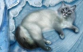 Картинка кошка, ткань, лежит, серая, голубая