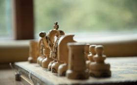 Обои дерево, игра, шахматы, фигуры