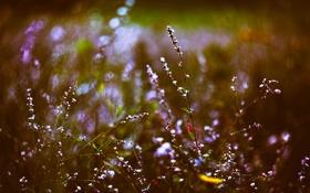 Картинка трава, цветы, боке