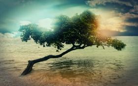 Обои облака, вода, небо, Дерево