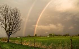 Картинка поле, дерево, забор, радуги