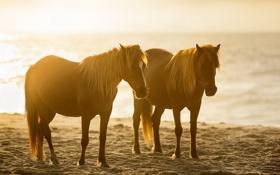 Картинка закат, природа, кони