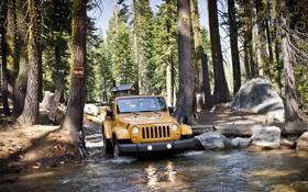 Обои лес, внедорожник, Jeep