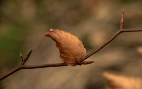 Обои осень, макро, лист, ветка, сухой