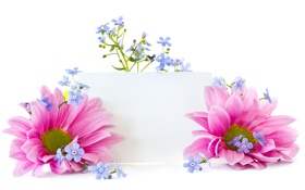 Обои цветы, лепестки, flowers