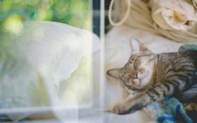 Обои Кошка, спит, отдыхает, cat