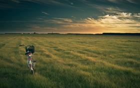 Обои поле, небо, трава, облака, пейзаж, закат, природа