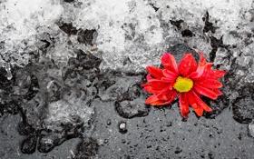 Обои зима, лёд, цветок