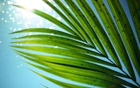 Картинка лето, небо, листья, солнце, пальма