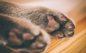 Картинка кошка, макро, лапки, шерсть, подушечки