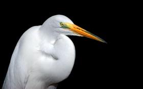 Картинка птица, перья, клюв, цапля