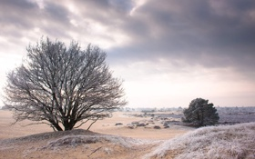 Картинка пейзаж, обои, природа, зима, холод, wallpapers, дерево