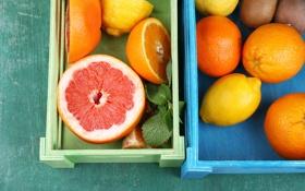 Обои мята, цитрусы, грейпфрут, лимон, апельсин