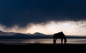 Картинка пейзаж, ночь, природа, конь