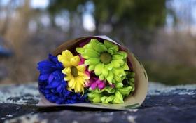 Обои цветы, синий, желтый, зеленый, фон, розовый, widescreen
