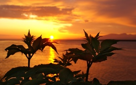 Картинка море, небо, листья, вода, солнце, облака, пейзаж