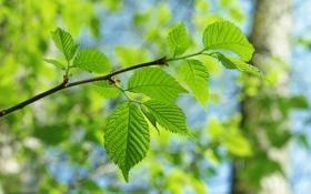 Картинка зелень, листья, деревья, дерево, листва