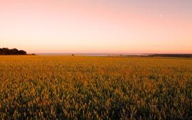 Обои поле, небо, фото, обои, пейзажи, поля