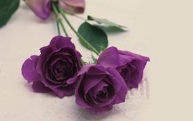 Обои цветы, праздник, хорошее настроение
