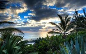 Обои солнце, вода, море, лучи, тучи, пальмы, алоэ