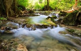 Картинка лес, солнце, деревья, река, камни, водопады