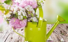 Обои вишня, весна, сакура, лейка, яблоня, цветение