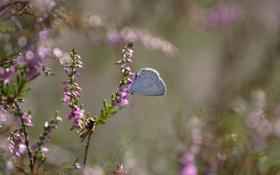 Обои макро, цветы, бабочка, растение, ветка, насекомое