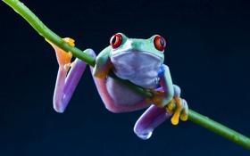 Картинка лягушка, цветная, стебль