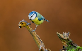Обои птица, ветка, клюв, перья, цвет
