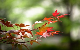 Картинка осень, листья, цвета, природа, фон, обои, яркие