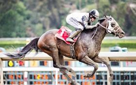 Обои конь, гонка, спорт, всадник