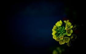 Обои цветы, отражение, фон, букет
