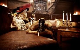 Обои диван, бокал, подушки, свечи, сигарета, собачка, кот в сапогах