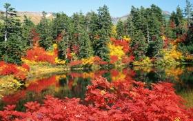 Картинка листья, деревья, горы, яркий, озеро, Осень, день
